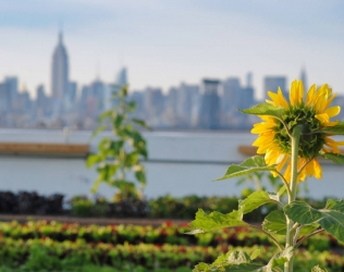 Embracing Urban Green Space in New York City