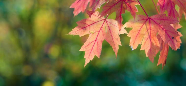 Fall Weekend Luxury Getaways For New Yorkers